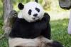 National Zoo - Photo Credit Ann Batdorf, National Zoo Photographer