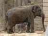 National Zoo - Photo Credit Jessie Cohen, National Zoo Photographer